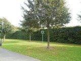 przycięte drzewo w ogrodzie w stolicy